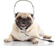 Crabot écoutant la musique Crabot de roquet d'isolement sur le blanc Photos libres de droits