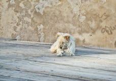 Crabot abandonné Photographie stock libre de droits