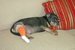 Crabot blessé Image libre de droits
