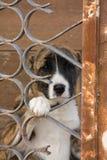 Crabot dans la cage Image libre de droits