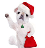 Crabot dans le chapeau rouge de Noël Photos libres de droits