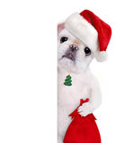 Crabot dans le chapeau rouge de Noël Image libre de droits