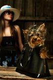 Crabot de chien terrier de Yorkshire dans le sac Photographie stock libre de droits