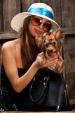 Crabot de chien terrier de Yorkshire dans le sac Images stock