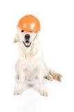 Crabot de construction Image libre de droits
