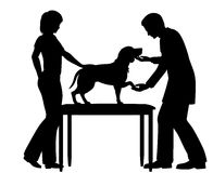 Crabot de examen de vétérinaire Photos stock