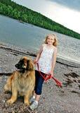 Crabot de Leonberger et jeune fille Image stock