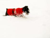 Crabot de neige Photos libres de droits