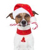 Crabot de Noël Images libres de droits