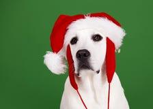 Crabot de Noël Photographie stock libre de droits