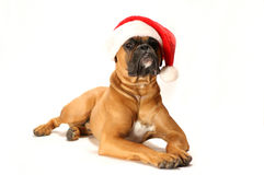 Crabot de Noël Image stock