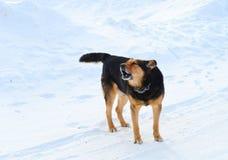 Crabot de pays sur le fond de neige Photos stock