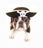 Crabot de pirate Image libre de droits