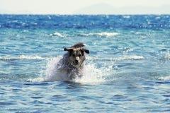 crabot de plage Image stock