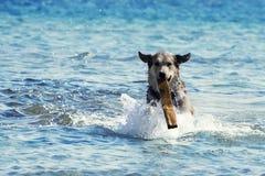 crabot de plage Photo stock