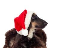 Crabot de race de Borzoi avec le chapeau de Santa Photos libres de droits