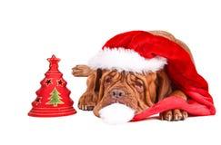 Crabot de Santa avec l'arbre de Noël Photographie stock libre de droits