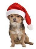 Crabot de Santa avec le chapeau rouge Photos stock