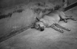 Crabot dormant sur la rue Images libres de droits
