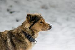 Crabot en hiver Photographie stock