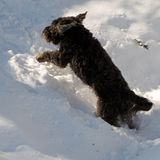 Crabot en hiver Photo libre de droits
