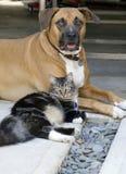 Crabot et chat Photographie stock libre de droits