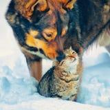 Crabot et chat dans la neige Image libre de droits