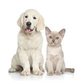 Crabot et chat ensemble Photos stock