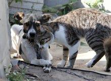 Crabot et chat ensemble Photo stock