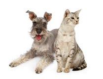 Crabot et chat se reposant ensemble Photos libres de droits