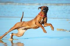 Crabot heureux Photo libre de droits