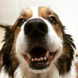 Crabot heureux Photographie stock libre de droits