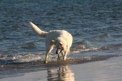 Crabot jouant à la plage images libres de droits