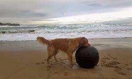Crabot jouant sur une plage Images libres de droits