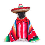 Crabot mexicain Photo stock
