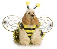 Crabot rectifié comme une abeille photos libres de droits