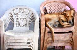 Crabot sans foyer dormant sur les présidences Photos libres de droits