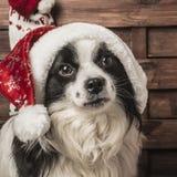 Crabot Santa de Noël Photos stock