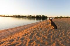 Crabot seul sur la plage photo libre de droits