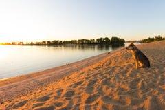 Crabot seul sur la plage photos libres de droits