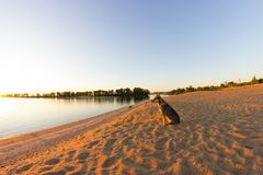 Crabot seul sur la plage images stock