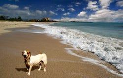 Crabot sur la plage Images libres de droits