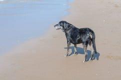 Crabot sur la plage Photographie stock