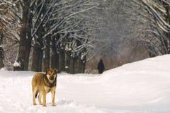 Crabot sur la route express de l'hiver Image stock
