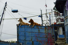 Crabot sur le bateau Photo stock