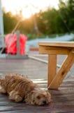 Crabot sur le dock de maison Image stock