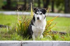 Crabot triste et sans foyer Un chien triste et sans abri abandonné sur les rues Photo stock