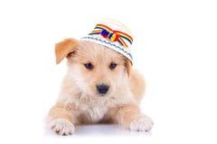Crabot utilisant un chapeau traditionnel roumain image libre de droits