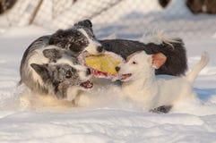 Crabots dans la neige Images libres de droits