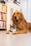 Crabots et chats Photo libre de droits